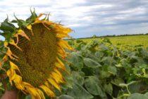 Lanzan el primer fondo provincial para implementar seguros agropecuarios